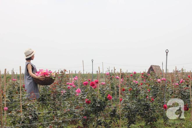 Ngắm khu vườn hoa hồng rộng đến 3 ha đẹp ngất ngây đã giúp cô gái 27 tuổi thoát khỏi bệnh trầm cảm ở Hà Nội - Ảnh 9.