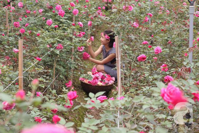 Ngắm khu vườn hoa hồng rộng đến 3 ha đẹp ngất ngây đã giúp cô gái 27 tuổi thoát khỏi bệnh trầm cảm ở Hà Nội - Ảnh 13.