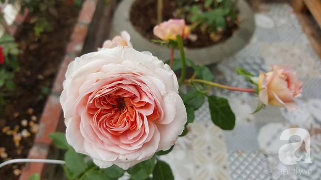 Ngắm khu vườn hoa hồng rộng đến 3 ha đẹp ngất ngây đã giúp cô gái 27 tuổi thoát khỏi bệnh trầm cảm ở Hà Nội - Ảnh 17.