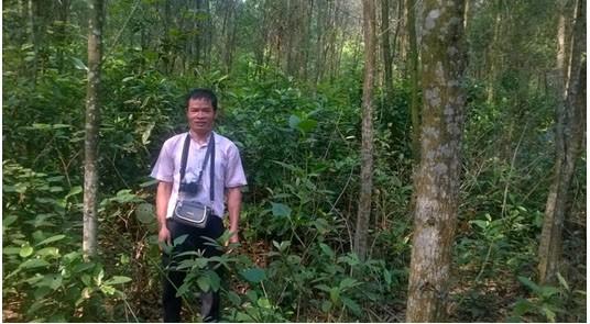 Cây Ưng bất bạc - vị thuốc quý ngàn năm cho lá gan của người Việt - Ảnh 4.