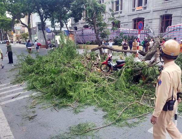 Hà Nội: Cây phượng cổ thụ bật gốc đổ ngang đường, 5 người thoát chết trong gang tấc - ảnh 3