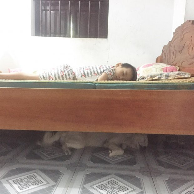 Giữa ngày nắng nóng nhìn bức ảnh cả baby lẫn thú cưng im lìm say giấc, dân mạng đồng loạt thả tim - ảnh 2