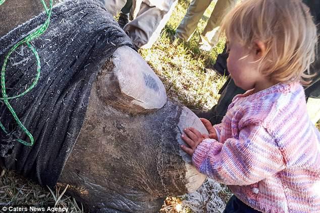 Khoảnh khắc ngọt ngào hiếm thấy: Bé gái nhẹ nhàng hôn chú tê giác bị cưa sừng khiến người lớn cũng phải lặng người suy ngẫm - Ảnh 3.