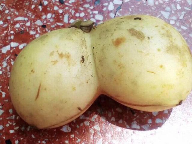 Nàng dâu đăng ảnh thách thức mọi cao thủ gọt dứa, dân mạng được thể rần rần khoe trái cây vườn nhà toàn hình thù lạ - ảnh 8