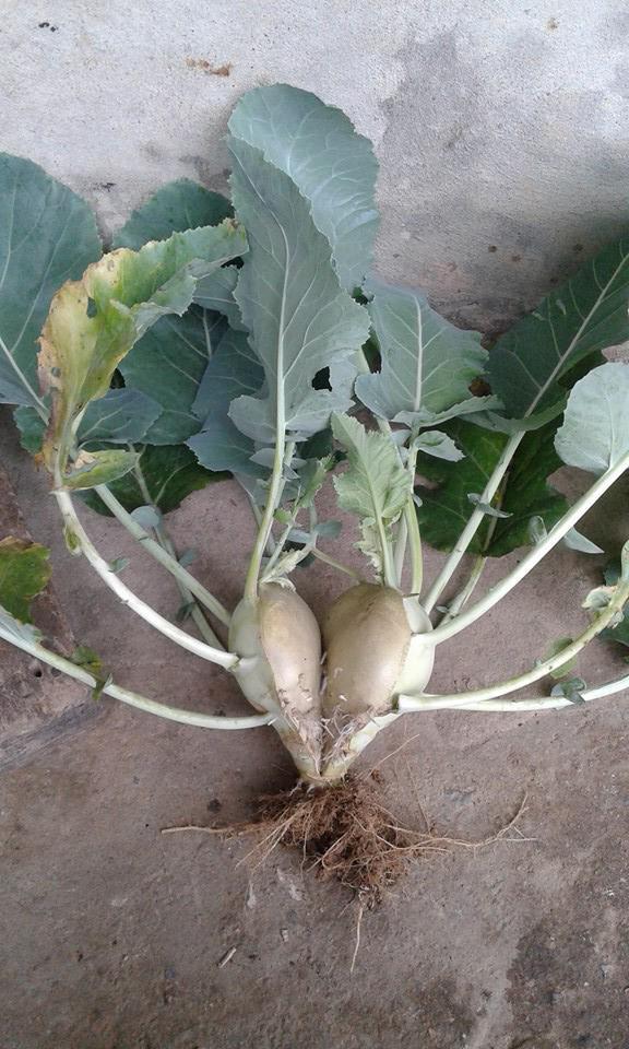 Nàng dâu đăng ảnh thách thức mọi cao thủ gọt dứa, dân mạng được thể rần rần khoe trái cây vườn nhà toàn hình thù lạ - ảnh 13