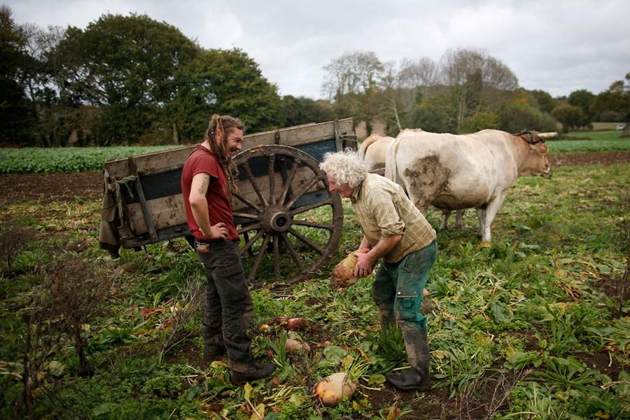 Cuộc sống nông trại yên bình, không sử dụng máy móc công nghiệp của đôi vợ chồng già - Ảnh 12.