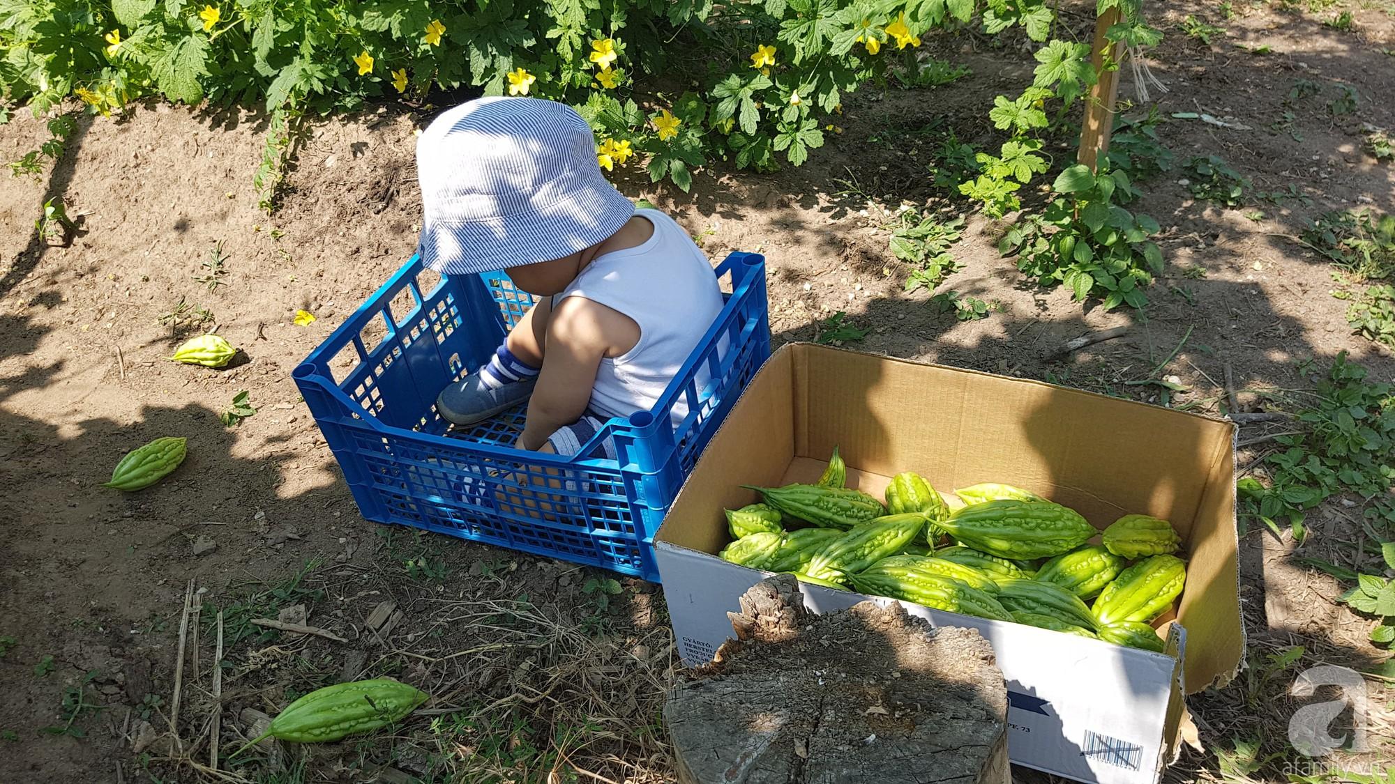 Choáng ngợp trước vườn rau sạch rộng 600m² với đủ rau trái Việt của bà mẹ trẻ ở nước ngoài - Ảnh 13.