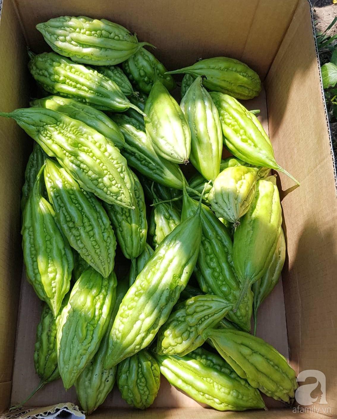Choáng ngợp trước vườn rau sạch rộng 600m² với đủ rau trái Việt của bà mẹ trẻ ở nước ngoài - Ảnh 10.