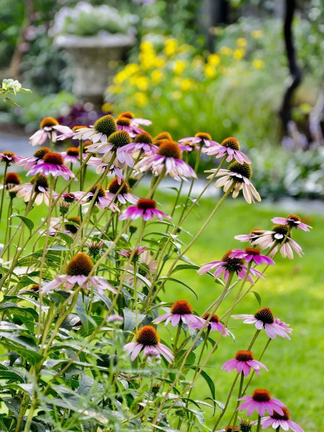 Khu vườn đẹp như chốn thần tiên do người phụ nữ dành tất cả tình yêu trong suốt 16 năm chăm sóc - Ảnh 26.