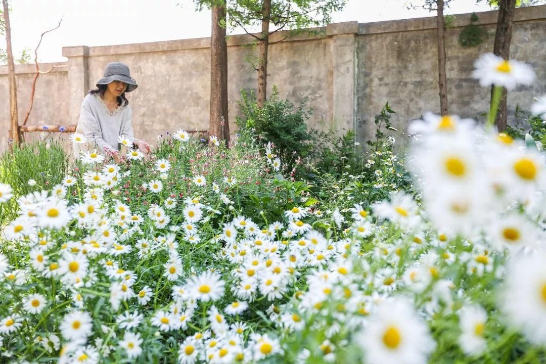 Khu vườn đẹp như chốn thần tiên do người phụ nữ dành tất cả tình yêu trong suốt 16 năm chăm sóc - Ảnh 25.