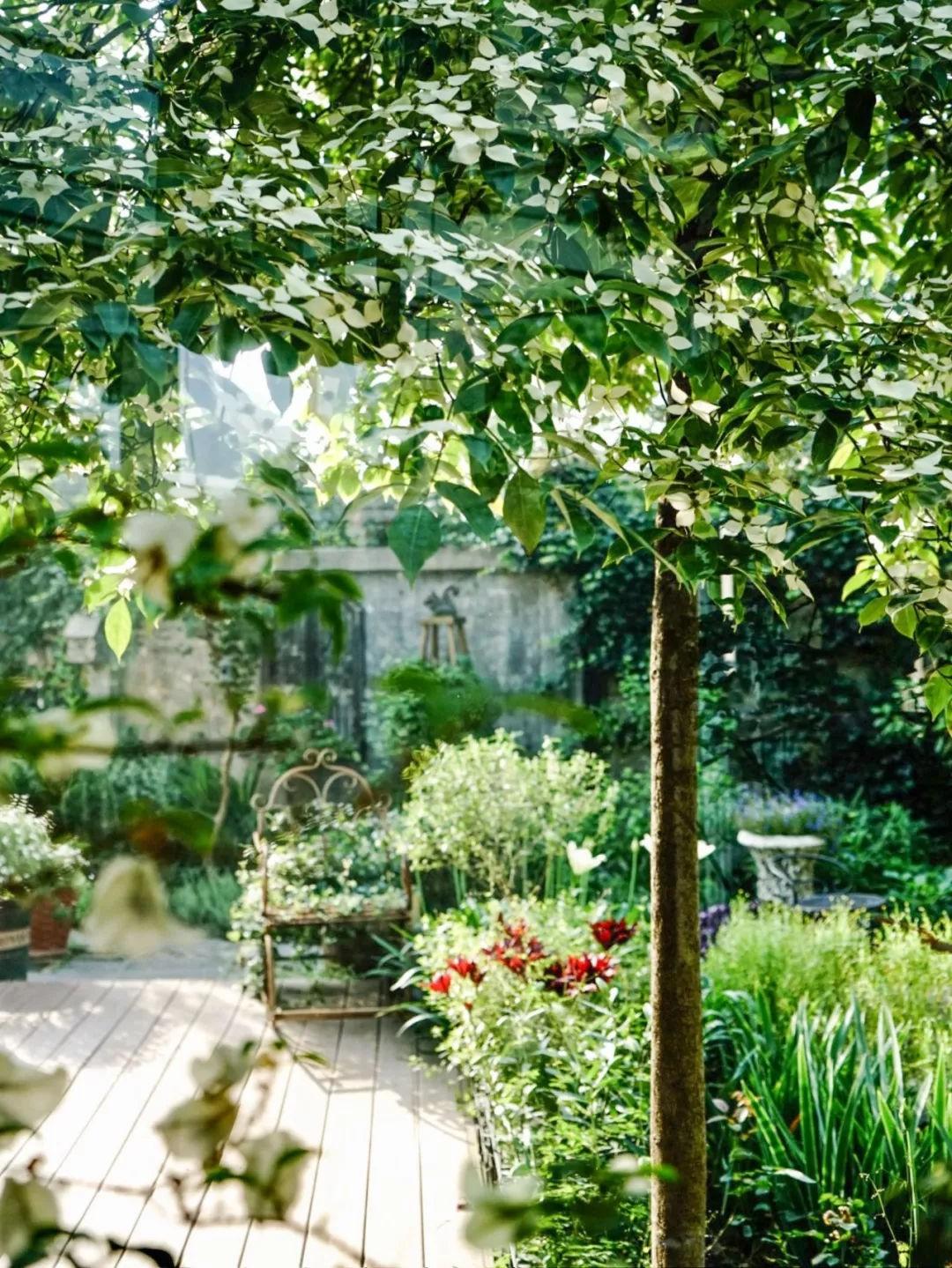 Khu vườn đẹp như chốn thần tiên do người phụ nữ dành tất cả tình yêu trong suốt 16 năm chăm sóc - Ảnh 12.