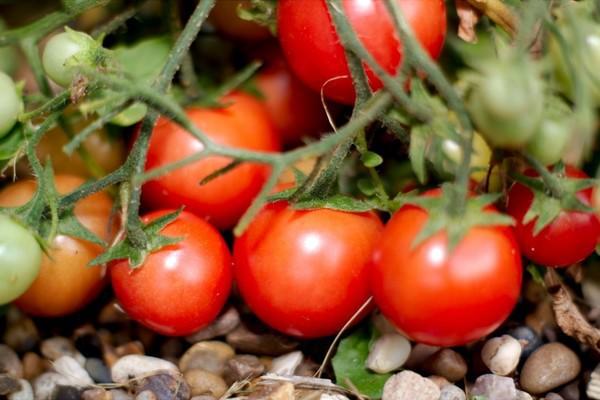 Vùi 1 quả trứng, 1 quả chuối xuống đất - mẹo hay không nên bỏ qua dành cho người làm vườn - Ảnh 4.