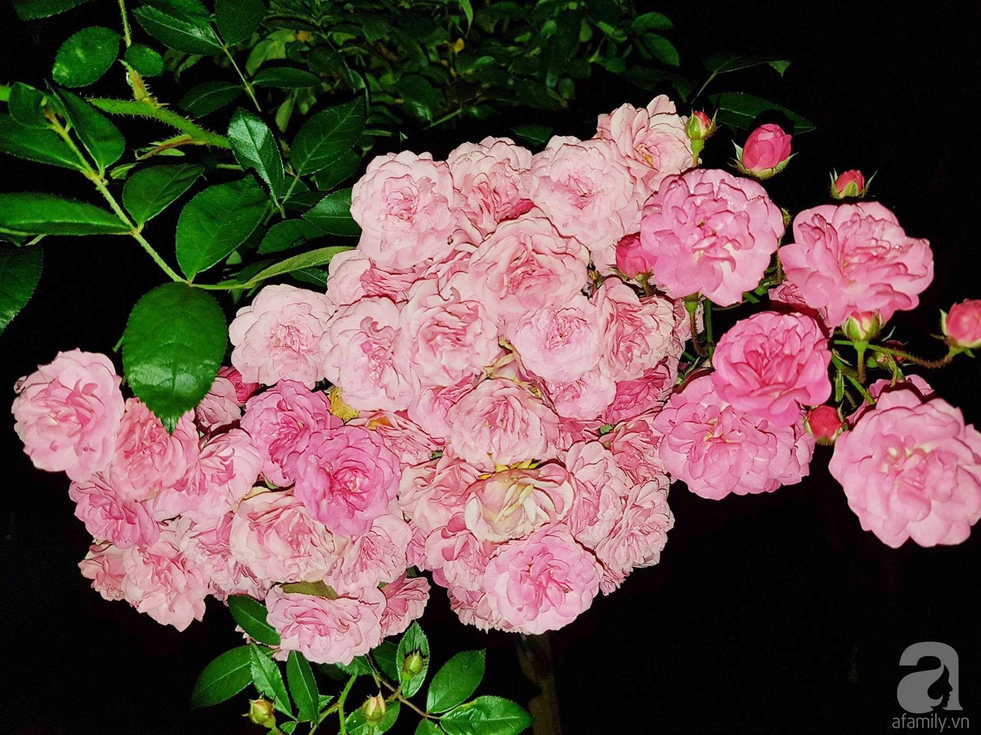 Người bố trồng cả vườn hồng đẹp như mơ để dành tặng con gái yêu ở Đà Lạt - Ảnh 20.