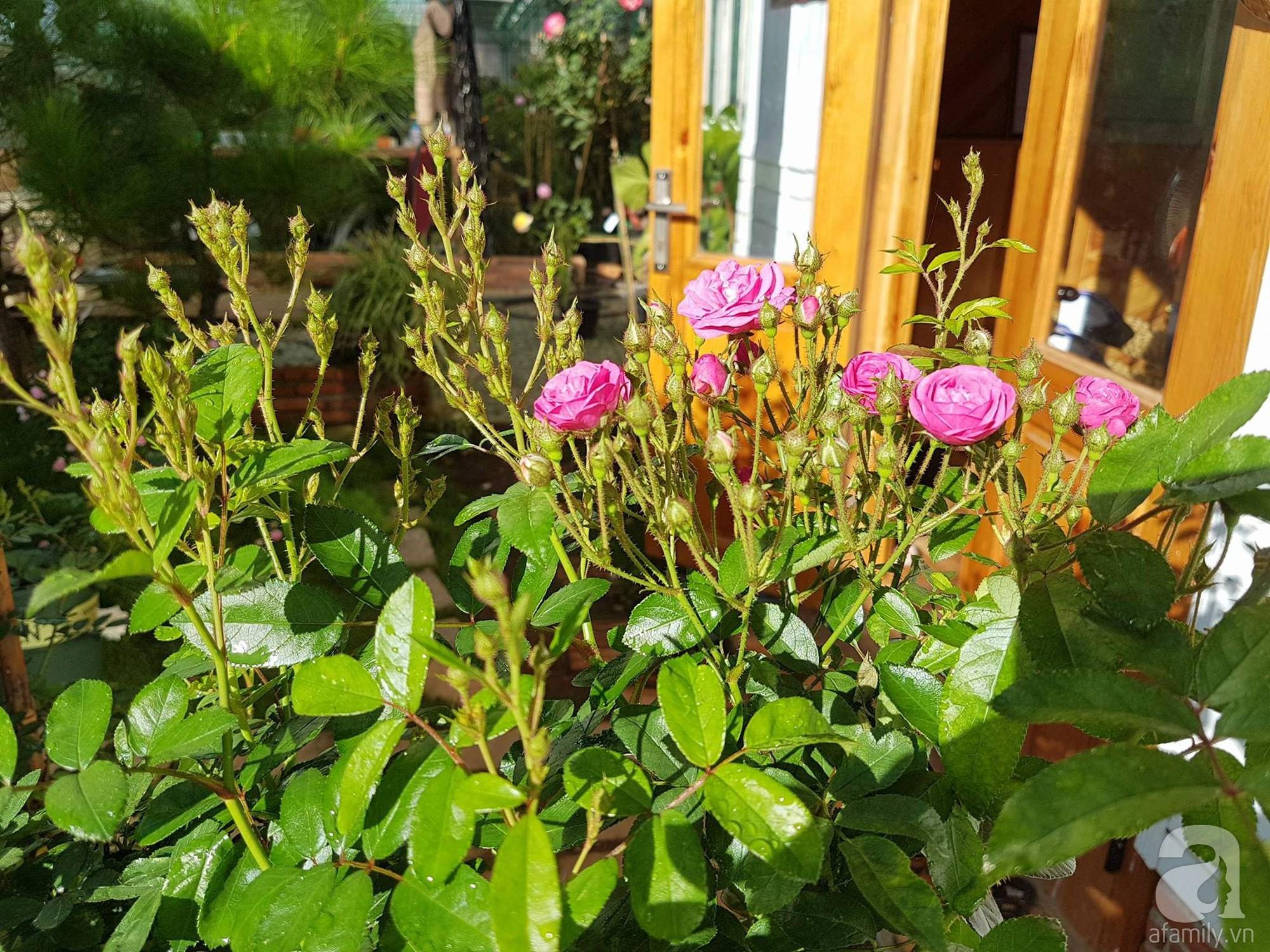 Người bố trồng cả vườn hồng đẹp như mơ để dành tặng con gái yêu ở Đà Lạt - Ảnh 8.