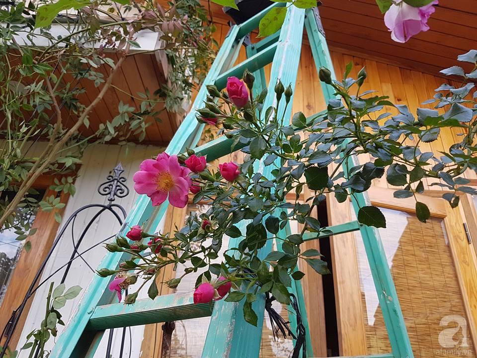 Người bố trồng cả vườn hồng đẹp như mơ để dành tặng con gái yêu ở Đà Lạt - Ảnh 17.