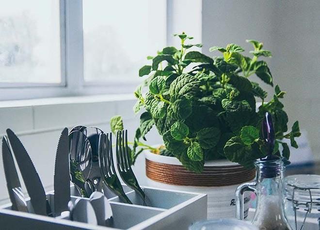 Những loại cây trồng tốt nhất cho từng căn phòng trong nhà bạn - Ảnh 1.