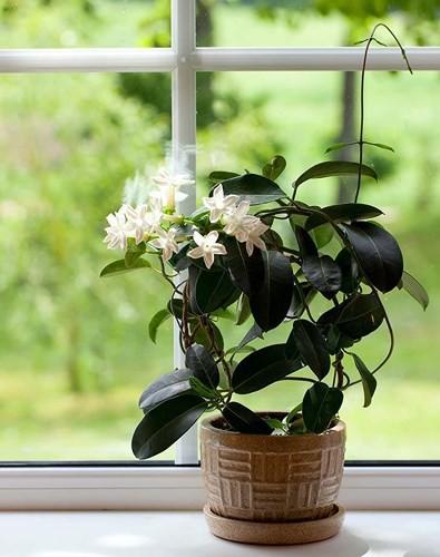 Những loại cây trồng tốt nhất cho từng căn phòng trong nhà bạn - Ảnh 3.