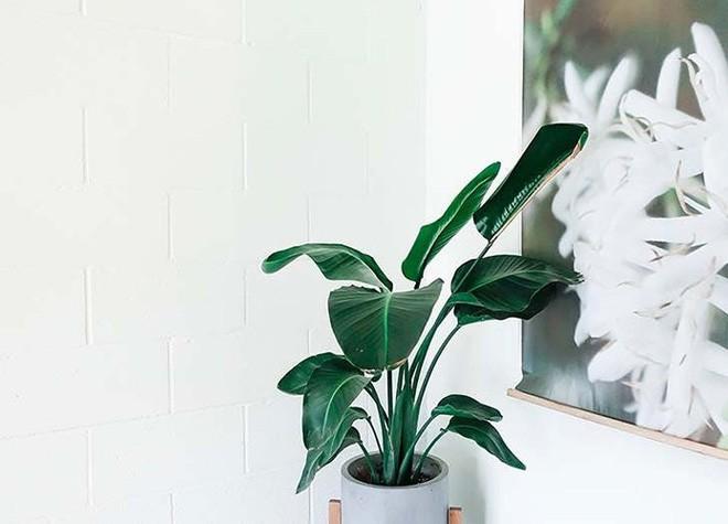 Những loại cây trồng tốt nhất cho từng căn phòng trong nhà bạn - Ảnh 7.