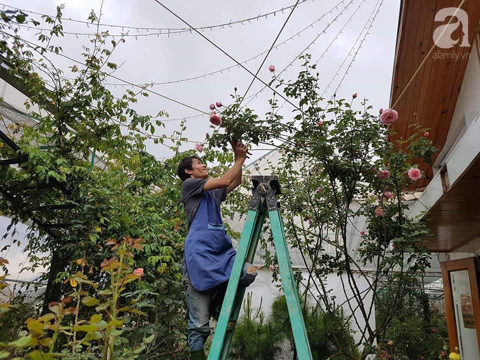 Người bố trồng cả vườn hồng đẹp như mơ để dành tặng con gái yêu ở Đà Lạt - Ảnh 1.