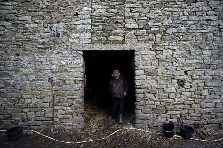Cuộc sống nông trại yên bình, không sử dụng máy móc công nghiệp của đôi vợ chồng già - Ảnh 9.