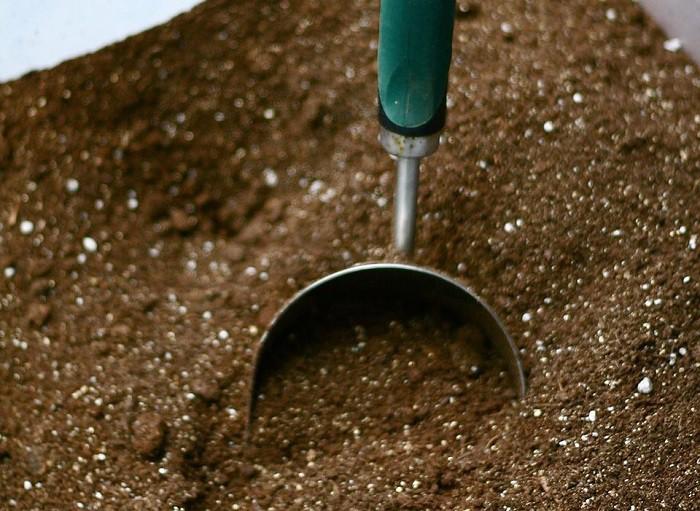 12 gạch đầu dòng cơ bản giúp bạn trồng cà chua trong vườn nhà vừa ngon, sạch lại năng suất - Ảnh 3.