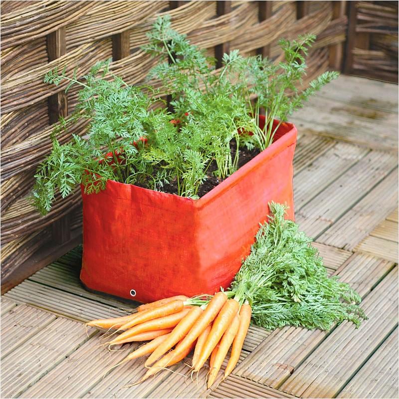Cách trồng cà rốt tại nhà cực đơn giản, mùa nào cũng có cà rốt sạch để ăn - Ảnh 3.