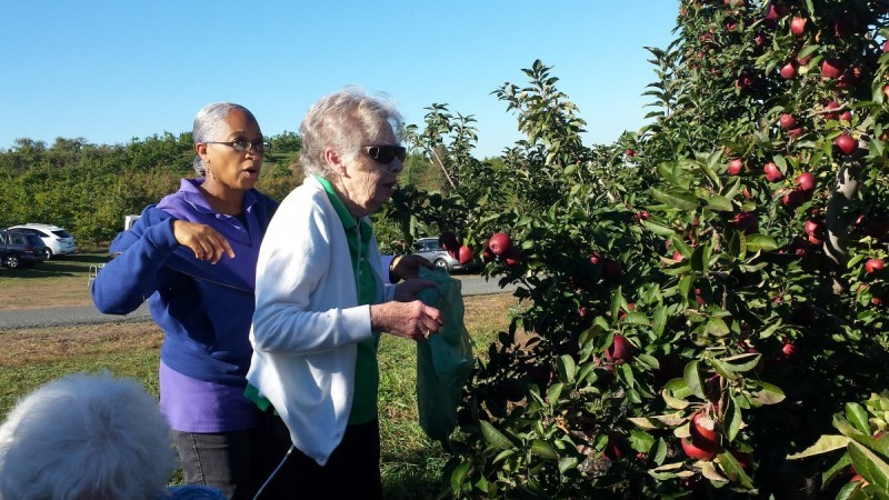 apple-picking-20161-e1476115733393-15309371699371252765705.jpg