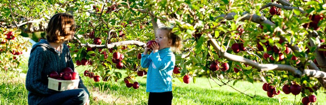 orchardslide3-1530937169827886497866.jpg