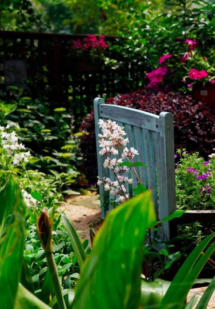 Khu vườn bình yên như xứ sở thần tiên ngập tràn hoa lá do cô gái tận tụy bỏ cả thanh xuân để chăm bón suốt 10 năm - Ảnh 24.