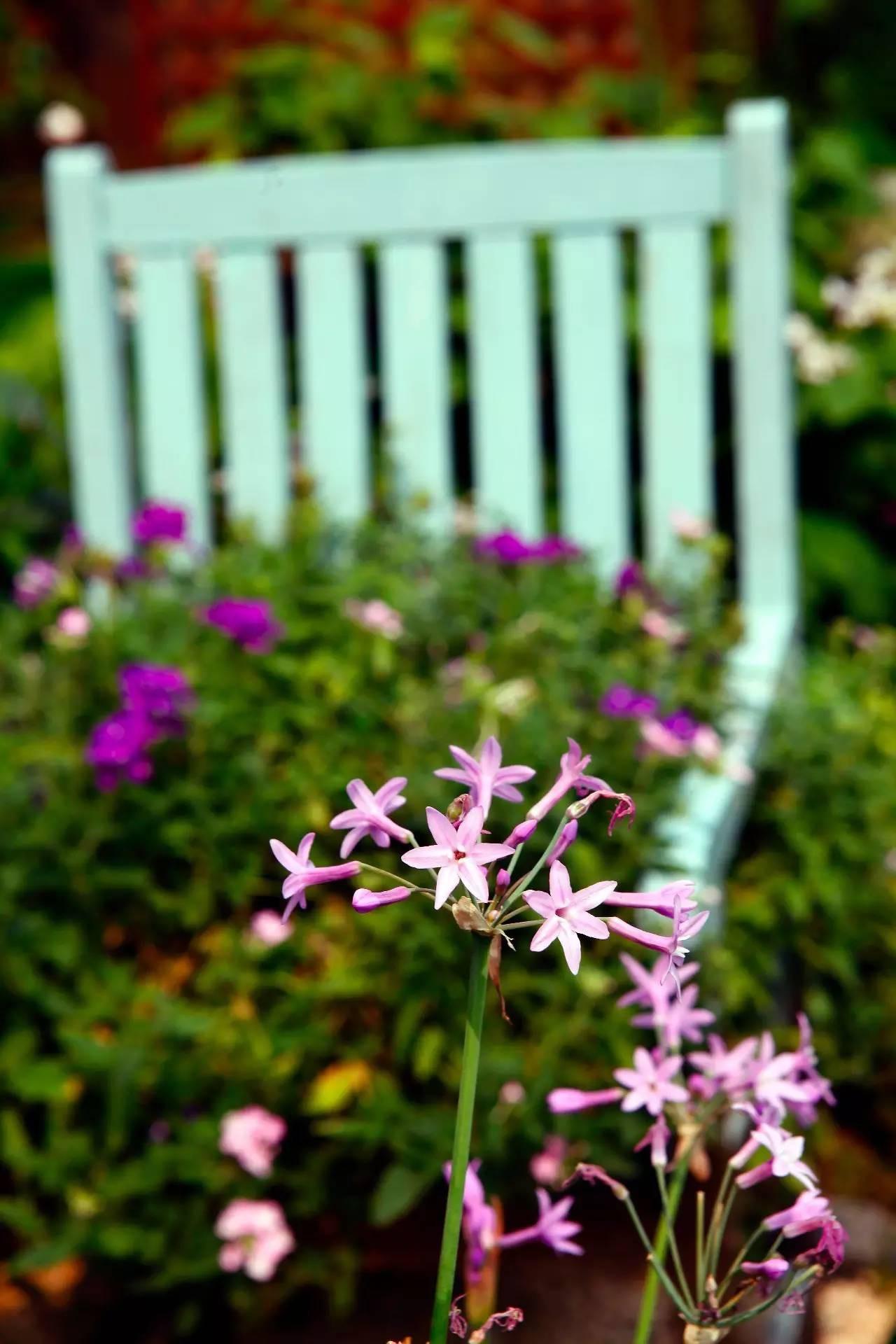 Khu vườn bình yên như xứ sở thần tiên ngập tràn hoa lá do cô gái tận tụy bỏ cả thanh xuân để chăm bón suốt 10 năm - Ảnh 15.