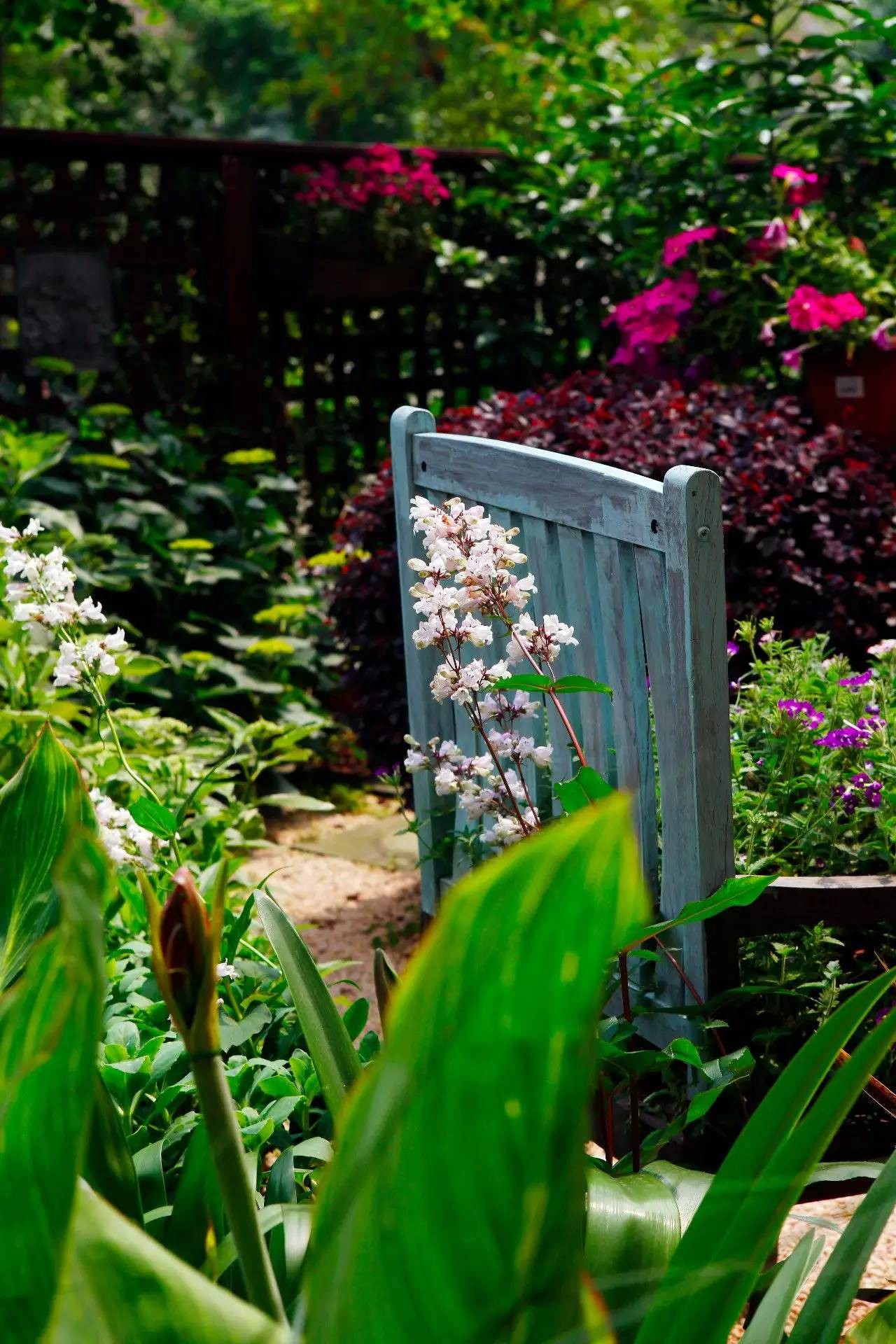 Khu vườn bình yên như xứ sở thần tiên ngập tràn hoa lá do cô gái tận tụy bỏ cả thanh xuân để chăm bón suốt 10 năm - Ảnh 12.