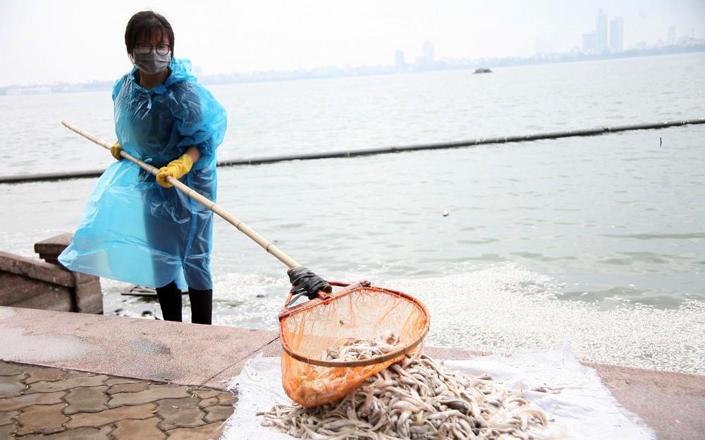 Cá chết trắng hồ Tây: Nguyên nhân ban đầu là do thời tiết thay đổi bất thường