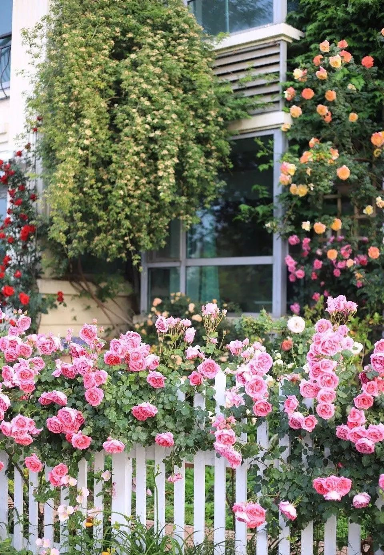 Ngôi nhà tràn ngập sắc hoa hồng ở thị trấn nhỏ của cô gái dành cả thanh xuân chỉ để trồng hoa làm đẹp nhà - Ảnh 15.