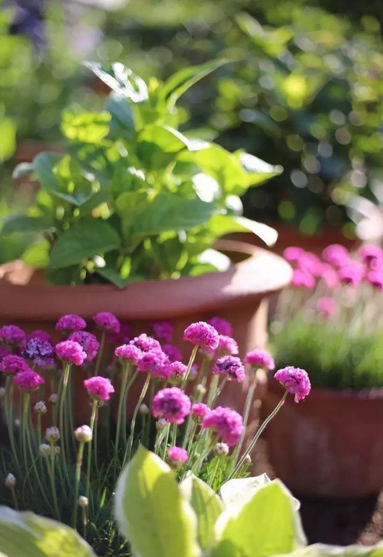 Ngôi nhà tràn ngập sắc hoa hồng ở thị trấn nhỏ của cô gái dành cả thanh xuân chỉ để trồng hoa làm đẹp nhà - Ảnh 19.