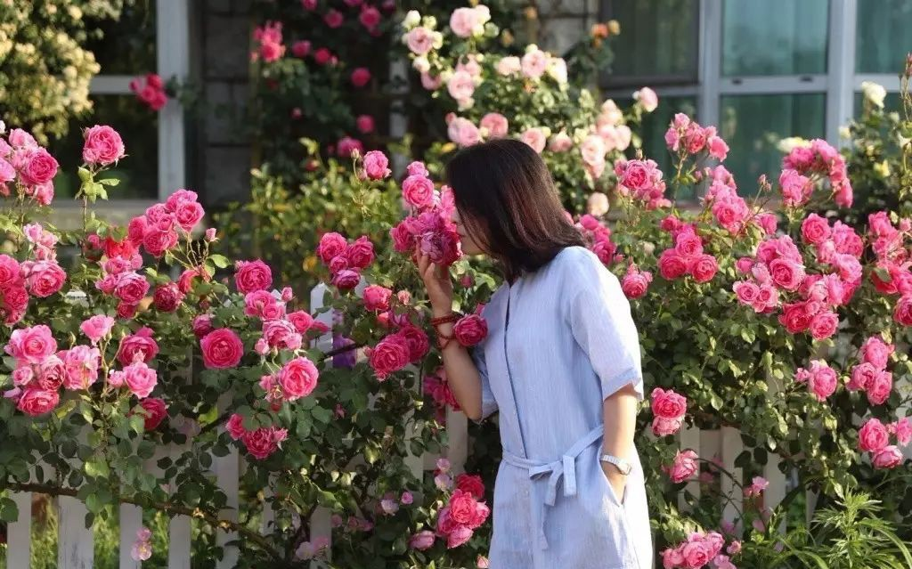 Ngôi nhà tràn ngập sắc hoa hồng ở thị trấn nhỏ của cô gái dành cả thanh xuân chỉ để trồng hoa làm đẹp nhà - Ảnh 12.