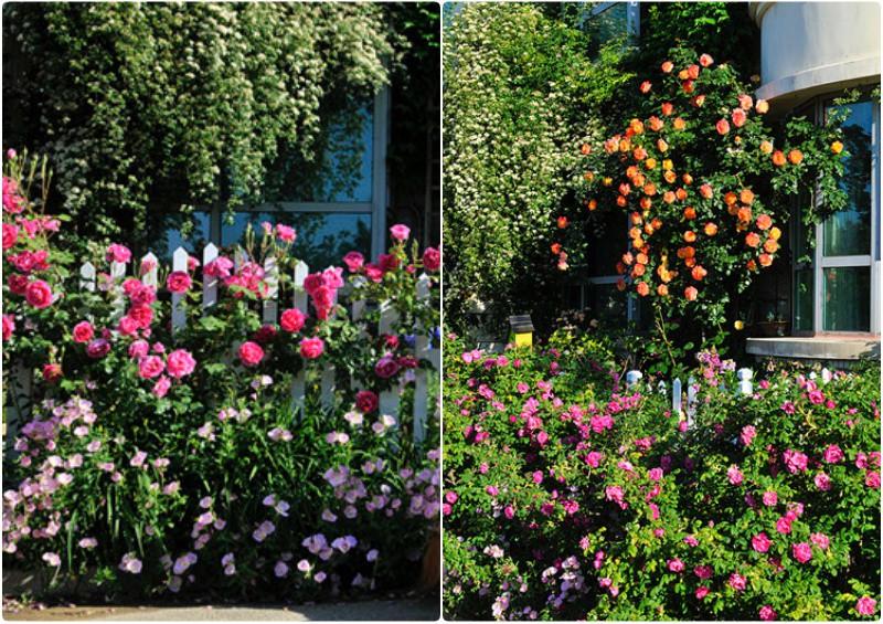 Ngôi nhà tràn ngập sắc hoa hồng ở thị trấn nhỏ của cô gái dành cả thanh xuân chỉ để trồng hoa làm đẹp nhà - Ảnh 7.