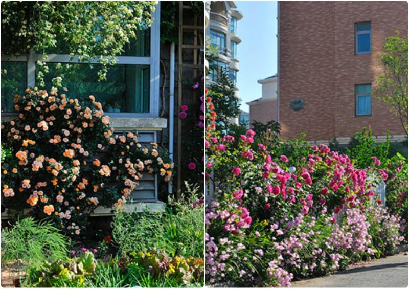 Ngôi nhà tràn ngập sắc hoa hồng ở thị trấn nhỏ của cô gái dành cả thanh xuân chỉ để trồng hoa làm đẹp nhà - Ảnh 6.