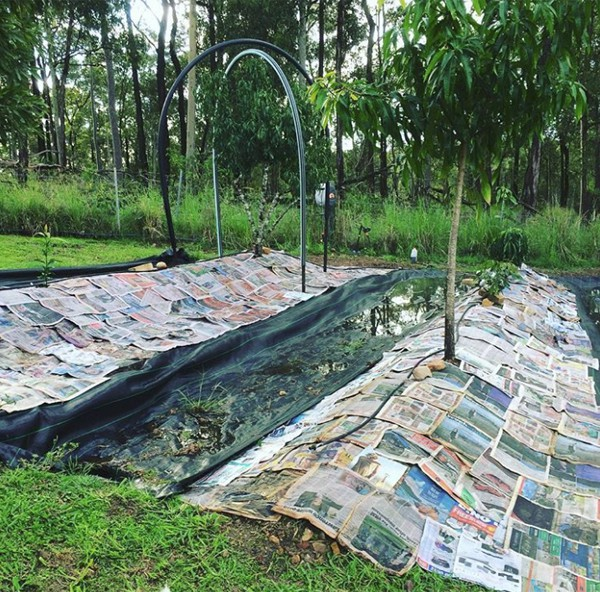 Sợ hãi thuốc diệt cỏ? Đừng lo lắng, bạn có thể diệt cỏ dại trong vườn nhà với những nguyên liệu thiên nhiên có sẵn này! - Ảnh 3.