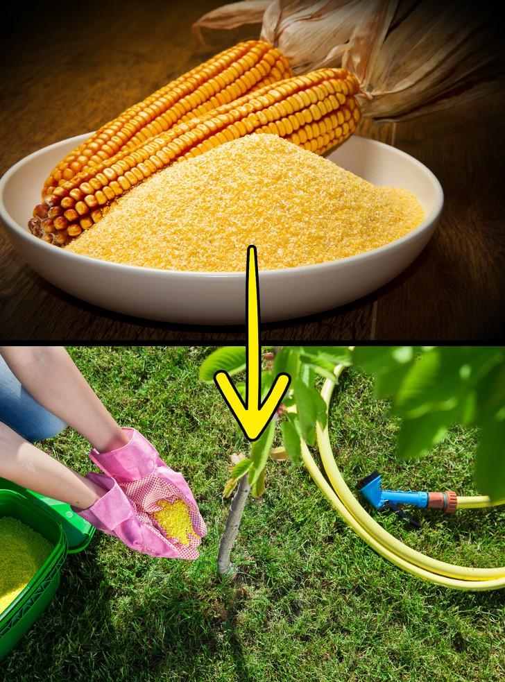 Sợ hãi thuốc diệt cỏ? Đừng lo lắng, bạn có thể diệt cỏ dại trong vườn nhà với những nguyên liệu thiên nhiên có sẵn này! - Ảnh 4.