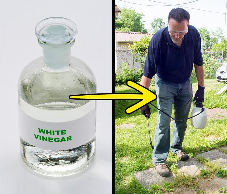 Sợ hãi thuốc diệt cỏ? Đừng lo lắng, bạn có thể diệt cỏ dại trong vườn nhà với những nguyên liệu thiên nhiên có sẵn này! - Ảnh 5.
