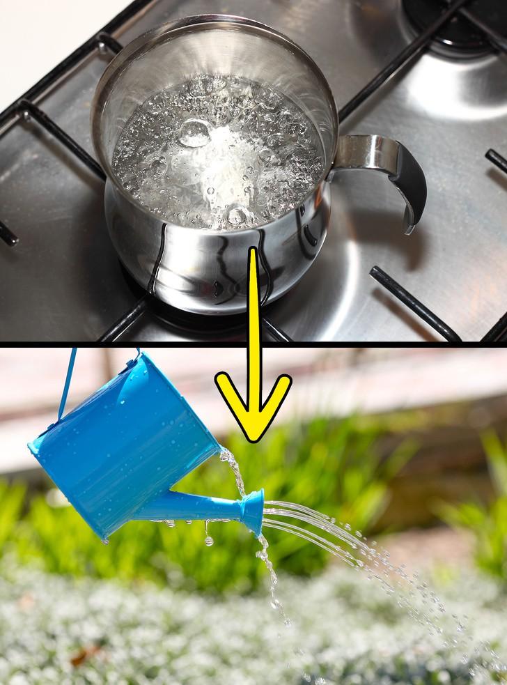 Sợ hãi thuốc diệt cỏ? Đừng lo lắng, bạn có thể diệt cỏ dại trong vườn nhà với những nguyên liệu thiên nhiên có sẵn này! - Ảnh 6.