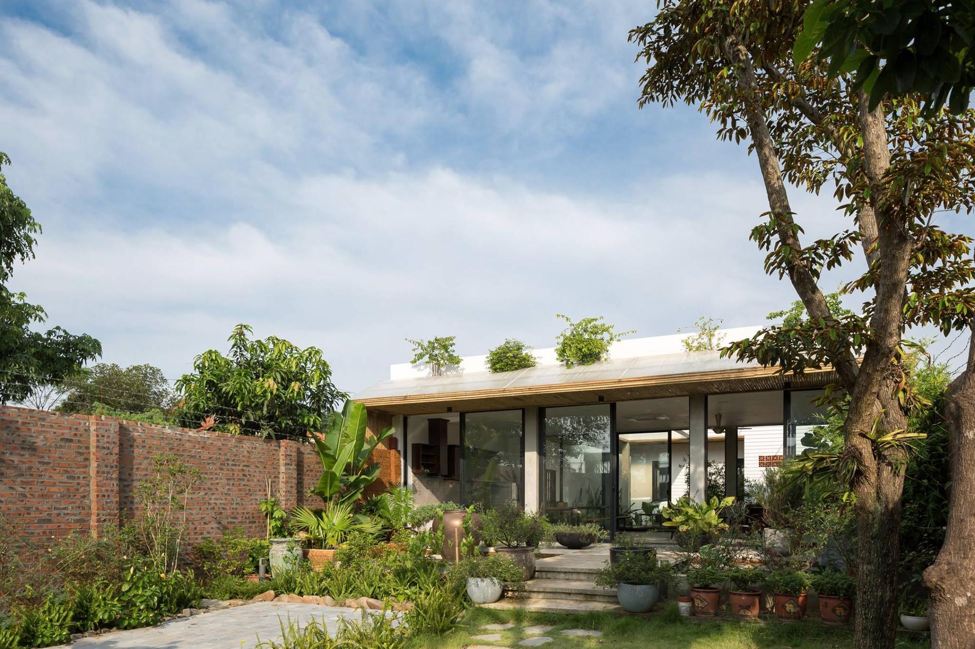 Ngôi nhà cấp 4 chan hòa ánh nắng và cây xanh mang lại vẻ yên bình đến khó tin ở Hà Nội - Ảnh 3.