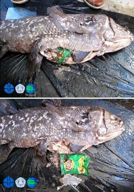 Trong vòng 1 tuần: Gấu trắng ăn nylon, rùa biển cực hiếm chết kẹt trong ghế sắt và những bức hình gây ám ảnh từ rác thải của con người - Ảnh 4.