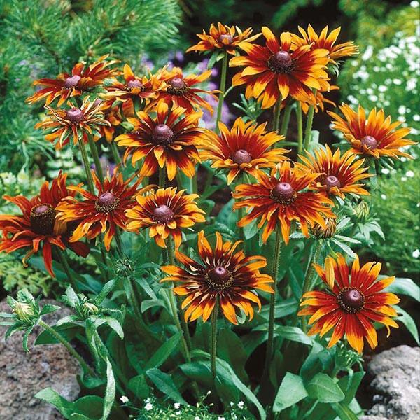 13 loại hoa xứng đáng mọc trong khu vườn nhà bạn trong mùa thu này   - Ảnh 2.
