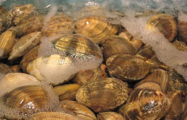 """Người Nhật chỉ mất 10 phút để nghêu, sò nhả hết cát, rau héo được """"hồi sinh"""", thịt cá tươi roi rói nhờ cách pha nước đơn giản không ngờ - Ảnh 2."""