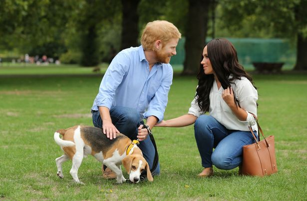 Người hâm mộ thích thú khi nhìn thấy Hoàng tử Harry và Meghan dắt thú cưng đi dạo trong công viên, đến tận nơi mới giật mình - Ảnh 8.