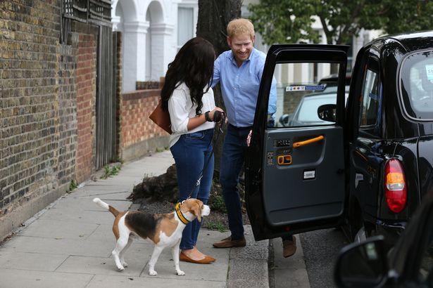 Người hâm mộ thích thú khi nhìn thấy Hoàng tử Harry và Meghan dắt thú cưng đi dạo trong công viên, đến tận nơi mới giật mình - Ảnh 5.
