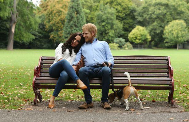 Người hâm mộ thích thú khi nhìn thấy Hoàng tử Harry và Meghan dắt thú cưng đi dạo trong công viên, đến tận nơi mới giật mình - Ảnh 7.