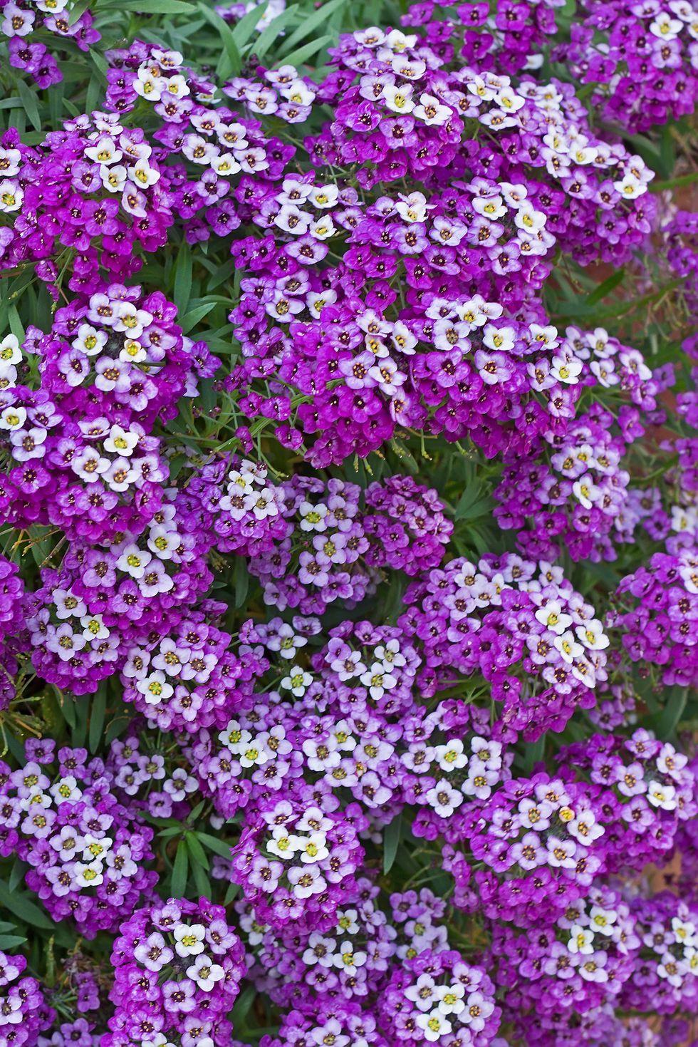 13 loại hoa xứng đáng mọc trong khu vườn nhà bạn trong mùa thu này   - Ảnh 10.