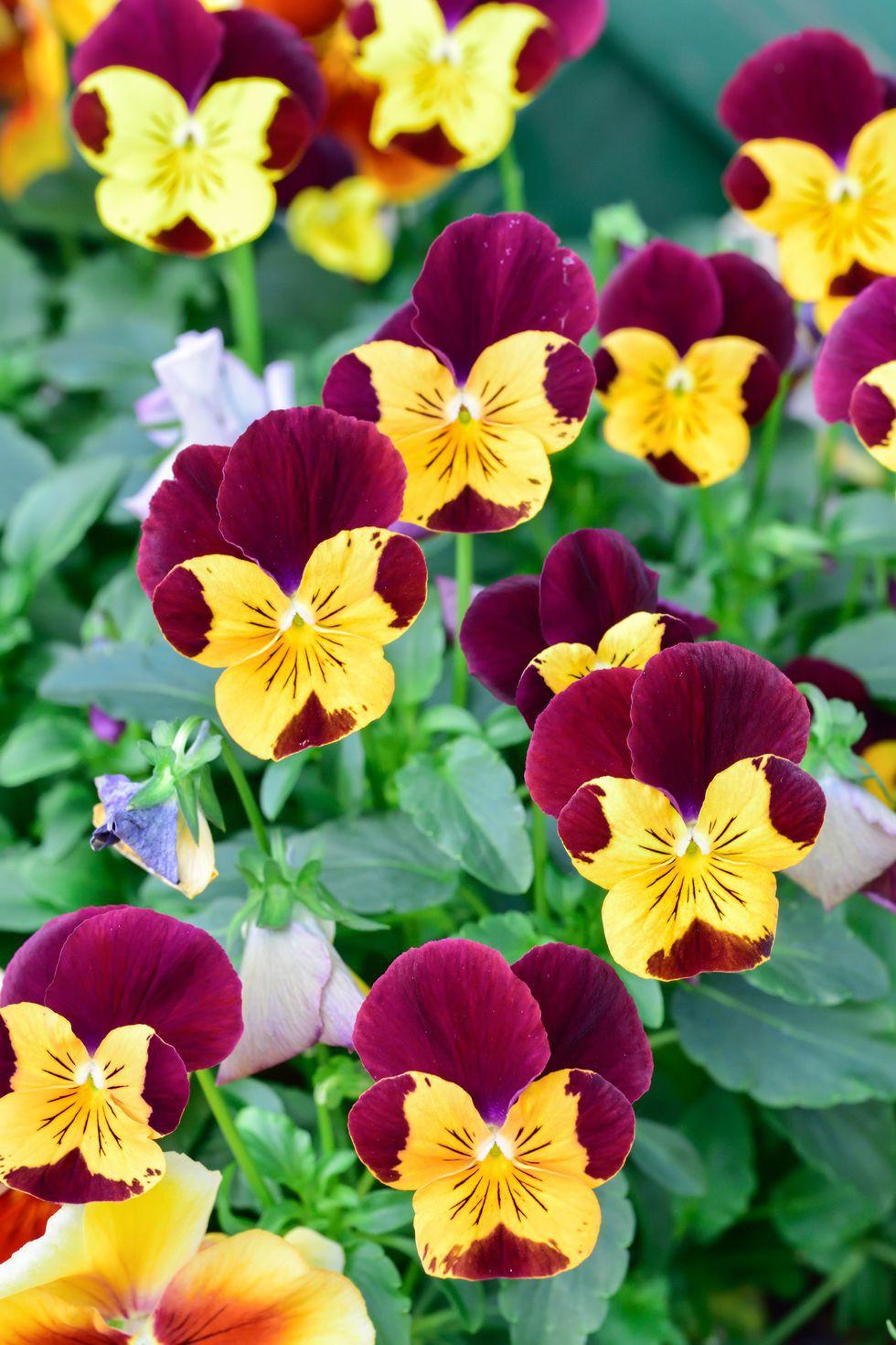 13 loại hoa xứng đáng mọc trong khu vườn nhà bạn trong mùa thu này   - Ảnh 3.